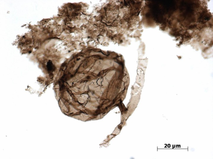 Scientists Find One-Billion-Year-Old Fungus In the Canadian Arctic - VICE