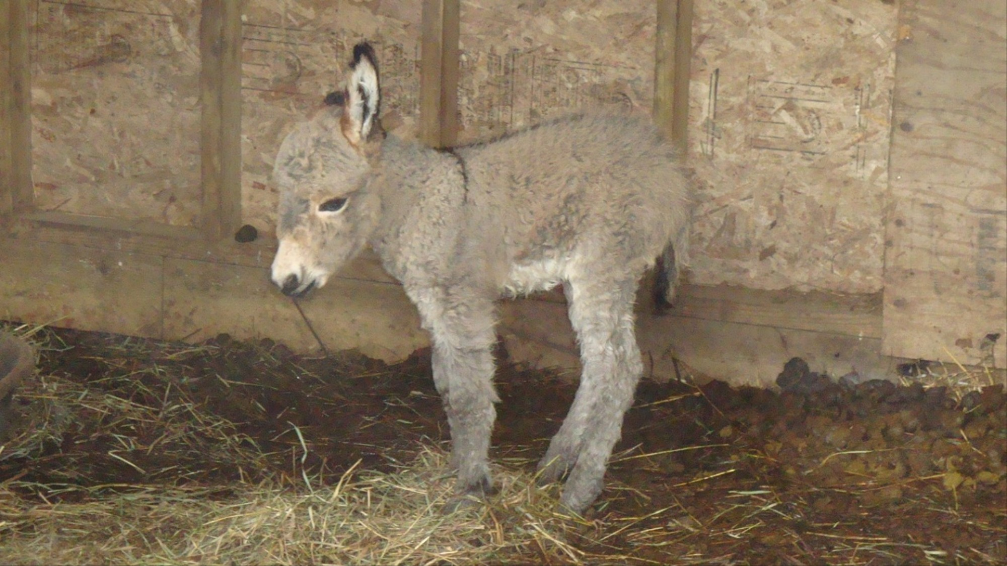 Here's a Heartwarming Story of a Miniature Donkey Being Rescued from