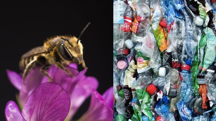 Bijen maken nu nesten die volledig uit plastic bestaan