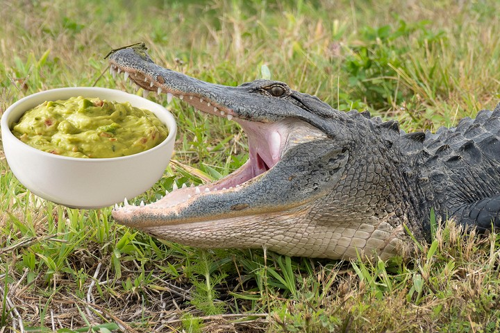 Florida Couple's Picnic Ruined by Guacamole-Stealing Alligator - VICE