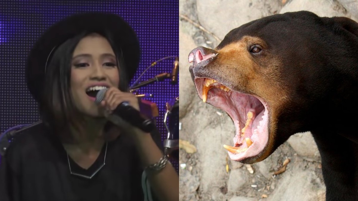 Malaysian Singer Arrested for Keeping a Bear in Her Home Says She Thought it Was a Dog