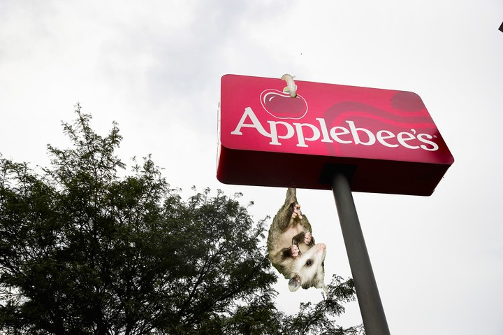Woman Somehow Offended by Charming Baby Opossum Crawling Around Applebee's Bar - VICE