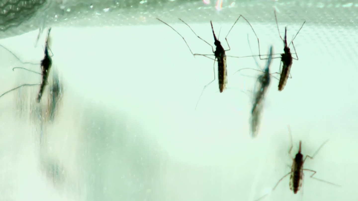 The First Vaccine For Malaria Has Arrived