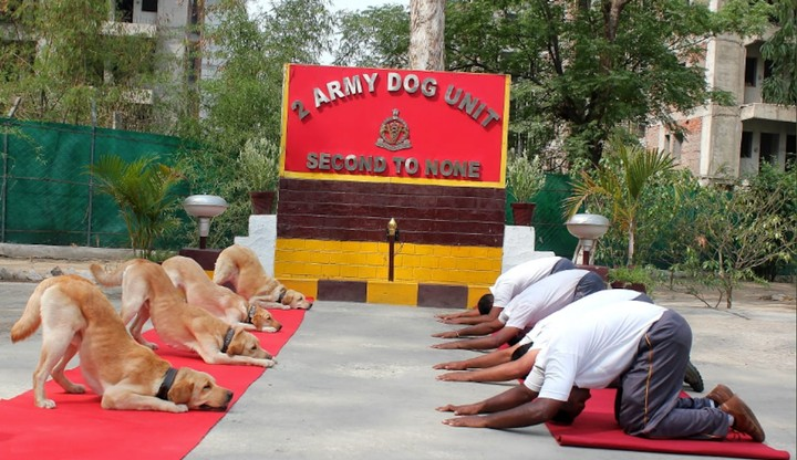 Some Dogs Did Yoga With the Indian Army for International Yoga Day - VICE