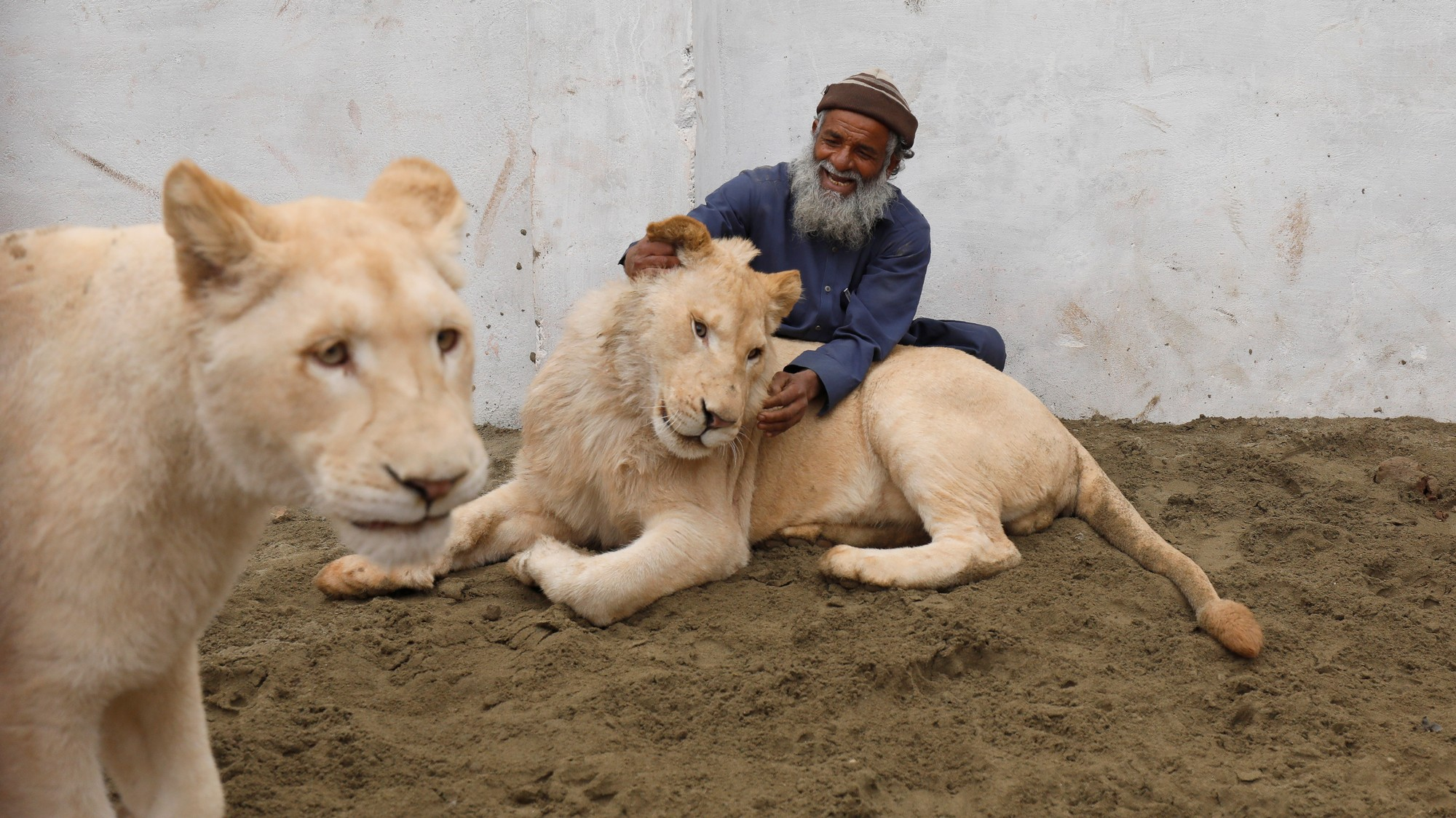Rich People in Pakistan Keep Pet Lions and Exotic Animals to