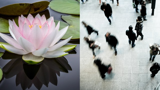 Tourists Stole All The Lotus Flowers In This Eco Park In China Vice