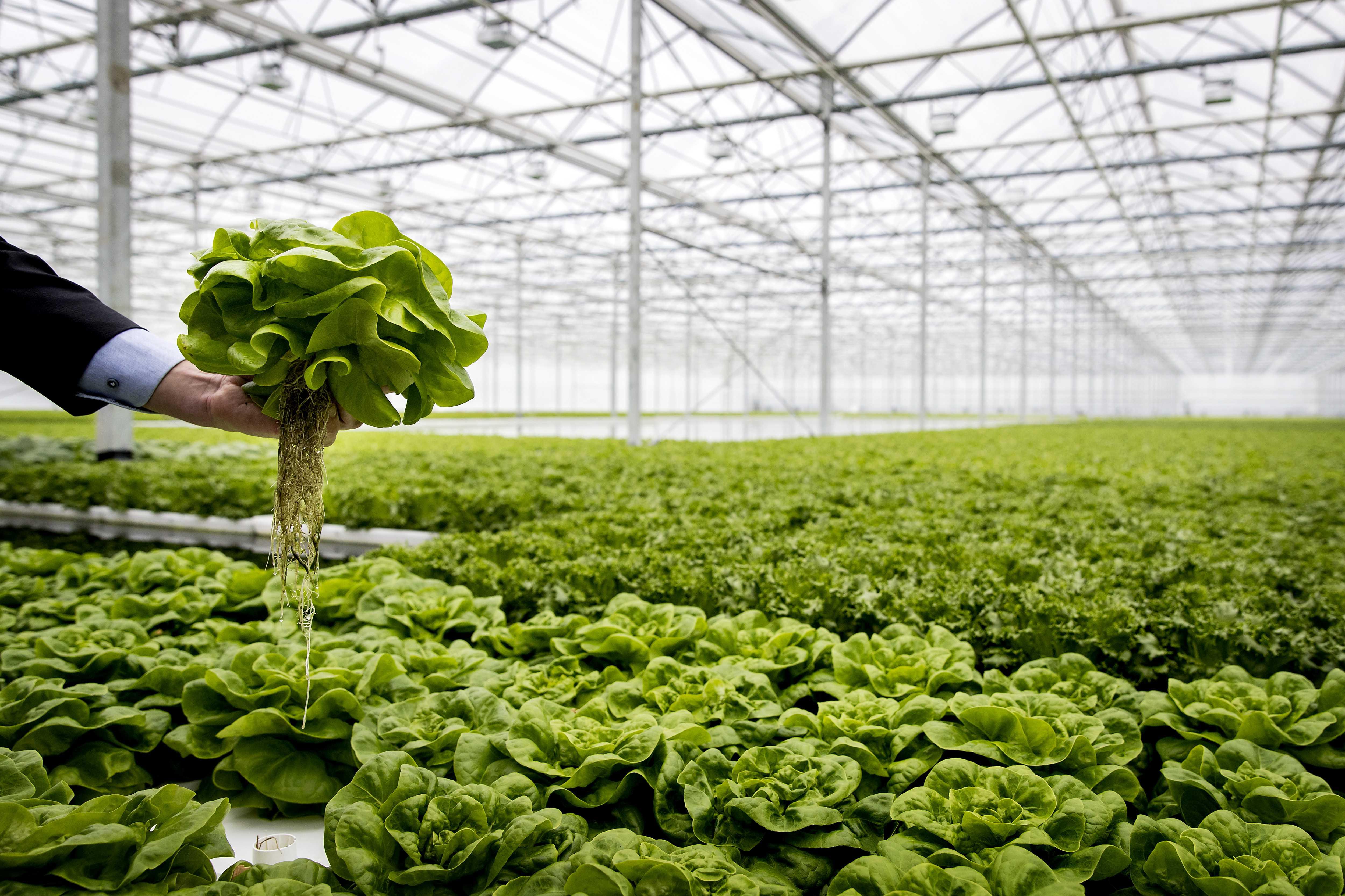 Le piante modificate geneticamente per combattere il cambiamento climatico - VICE