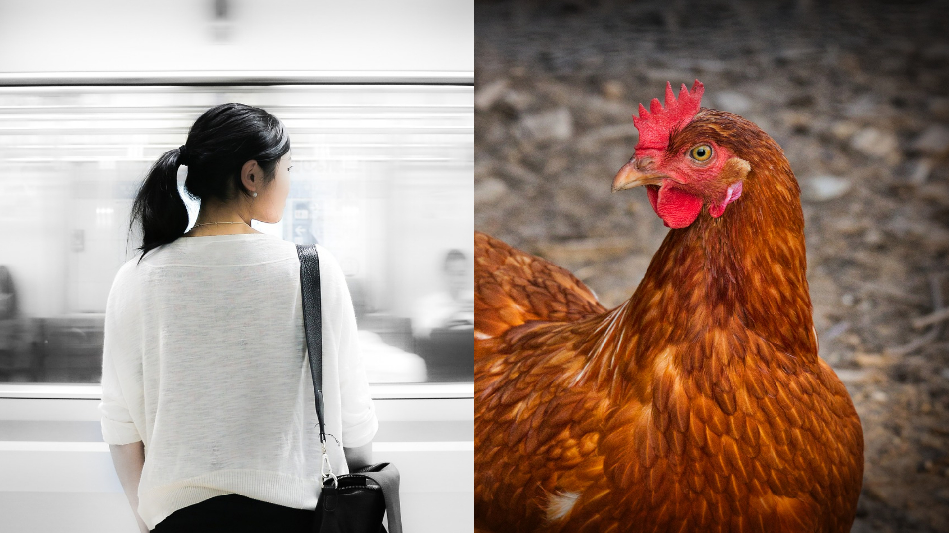 Woman in China Stopped From Bringing Live Chicken on Subway, Slaughters It on the Spot