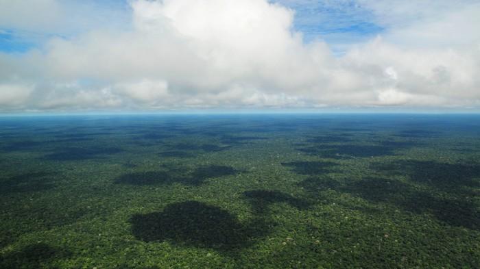 Miljarden bomen planten is geen oplossing voor klimaatverandering