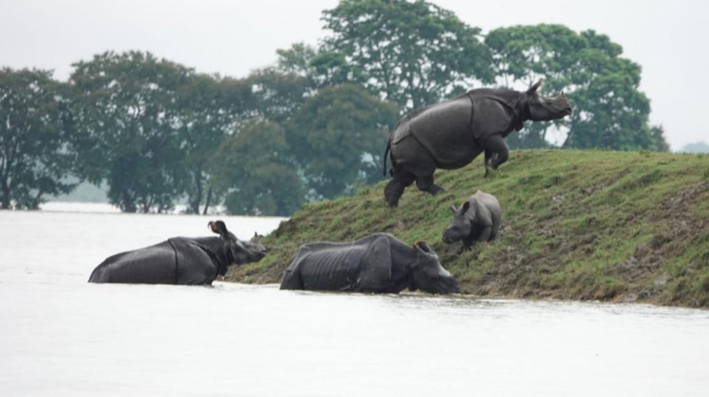 Assam Floods Have Put 90 Percent of Kaziranga National Park Under Water