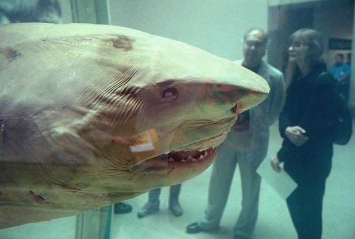 EXCLUSIVE: The Damien Hirst Shark Finally Speaks - GARAGE