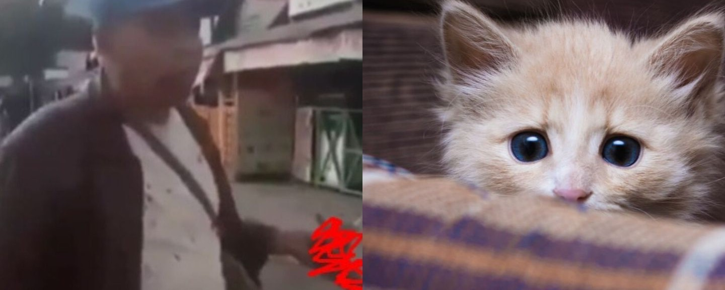 Viral Video Of A Man Eating A Live Cat Sparks Outrage In Indonesia