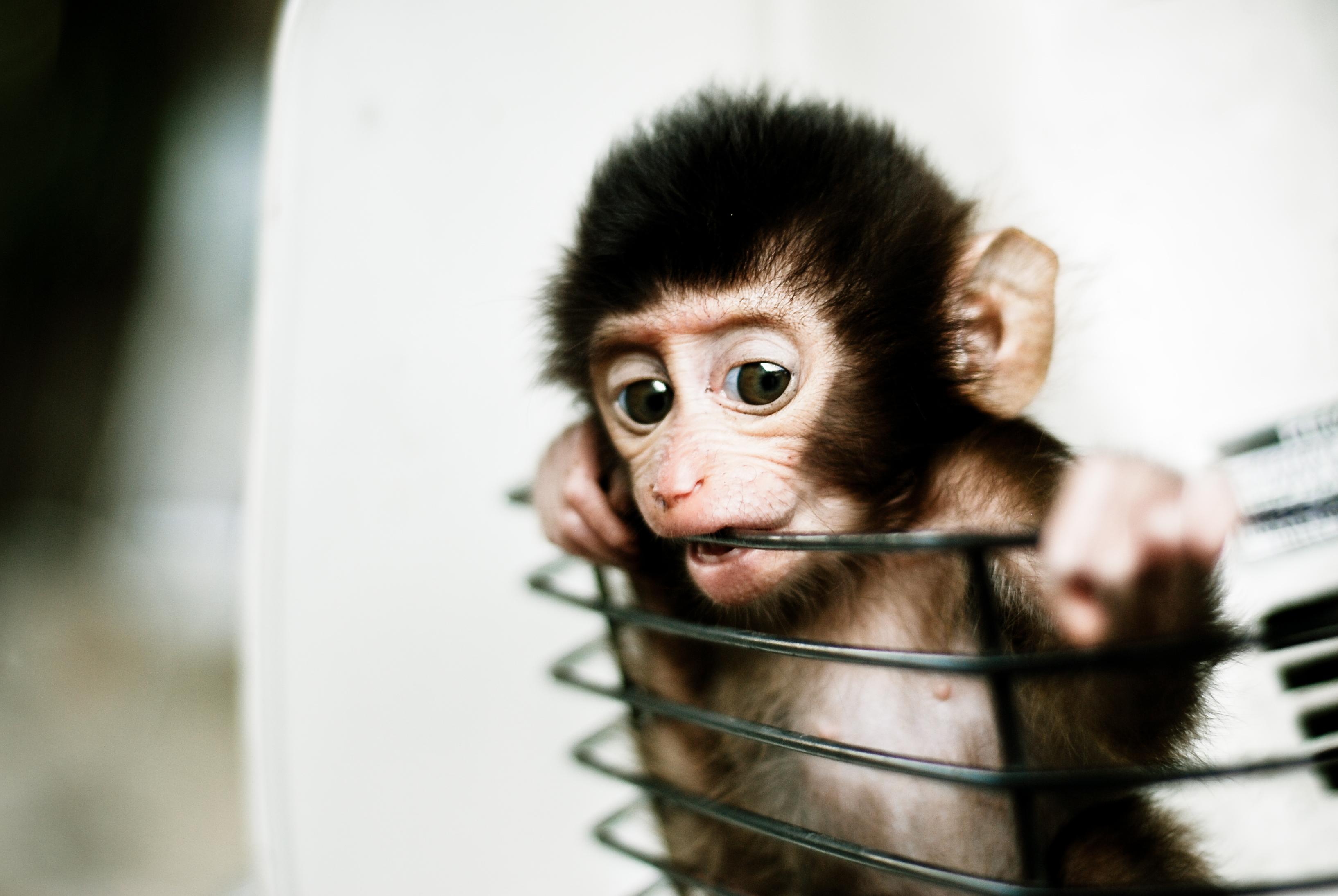In Cina è stata creata la prima chimera uomo-scimmia - VICE