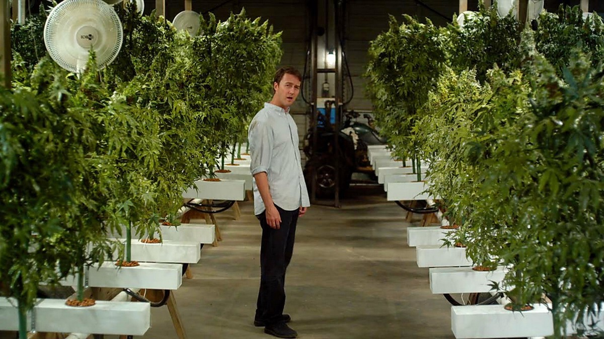 On a épluché le rapport économique sur le marché français de la weed - VICE