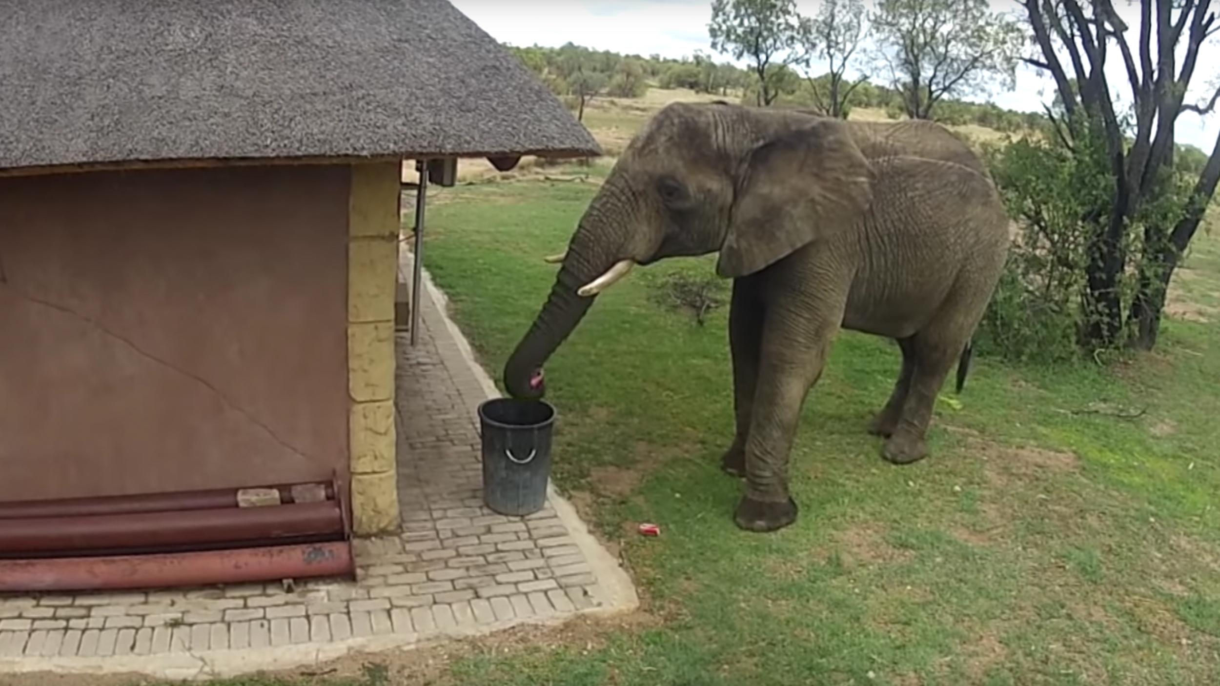 Dieser aufräumende Elefant ist umweltbewusster als du - VICE