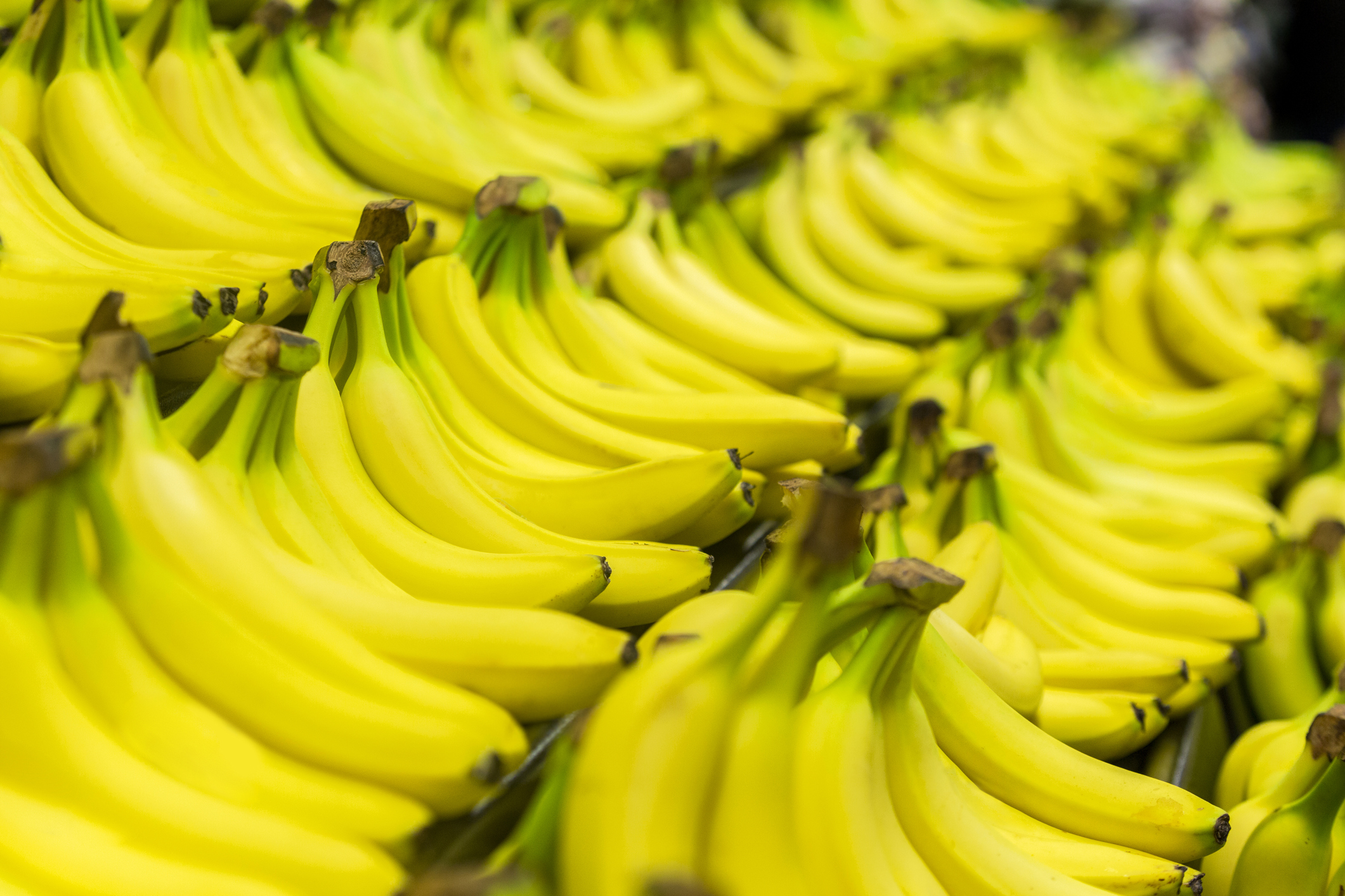 Un hongo imparable podría hacer que los plátanos se extingan - VICE
