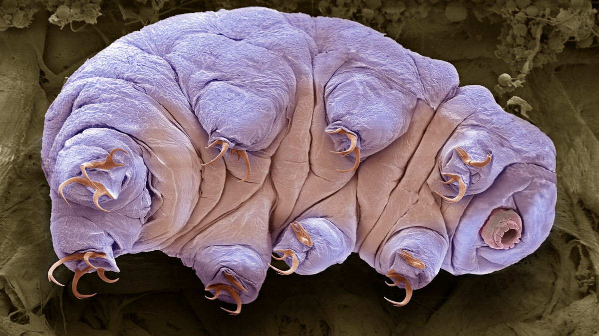 Tardigrade Spill on the Moon Inspires Need for Rules on Spreading Life Beyond Earth