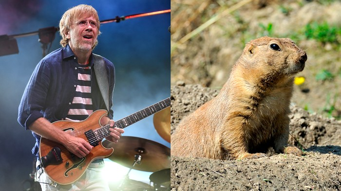 Plague-Infested Prairie Dogs Have Thrown a Phish Concert Into Chaos