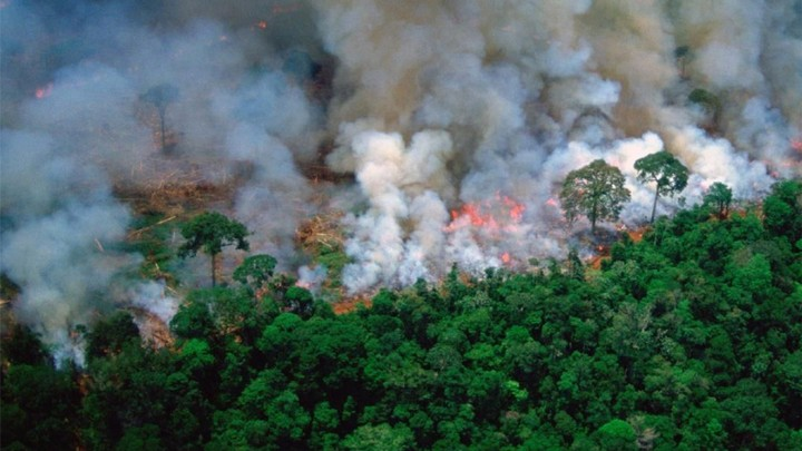 here's what to do if you're angry about the amazon rainforest fires