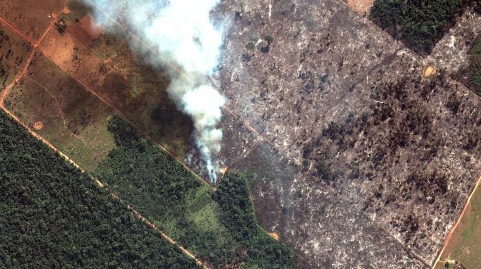 Ti senti triste per gli incendi in Amazzonia? Smetti di mangiare carne