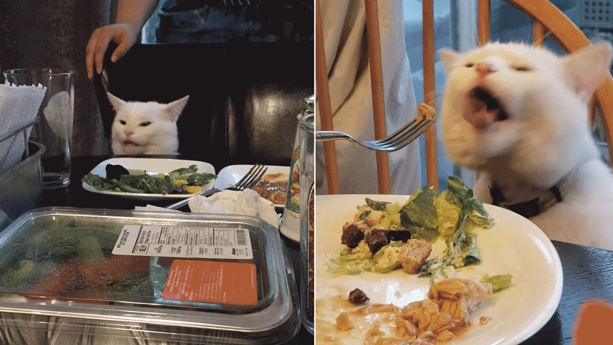 We Are All Smudge The Cat Confused In An Angry World Vice