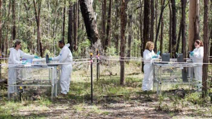 Dead Bodies Move While Decomposing, Australian Researchers Find