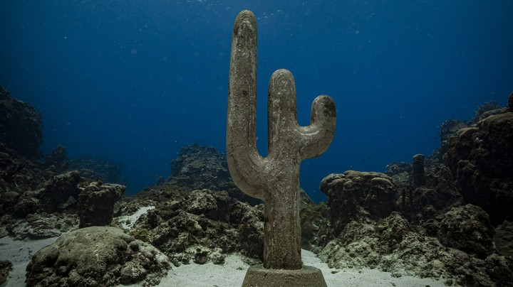 Can an Underwater Desert Restore Jamaica's Ailing Coral?