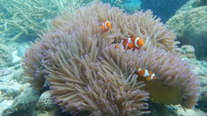 Filipino Scientists Have Invented a Device to Monitor Coral Without Getting in the Water