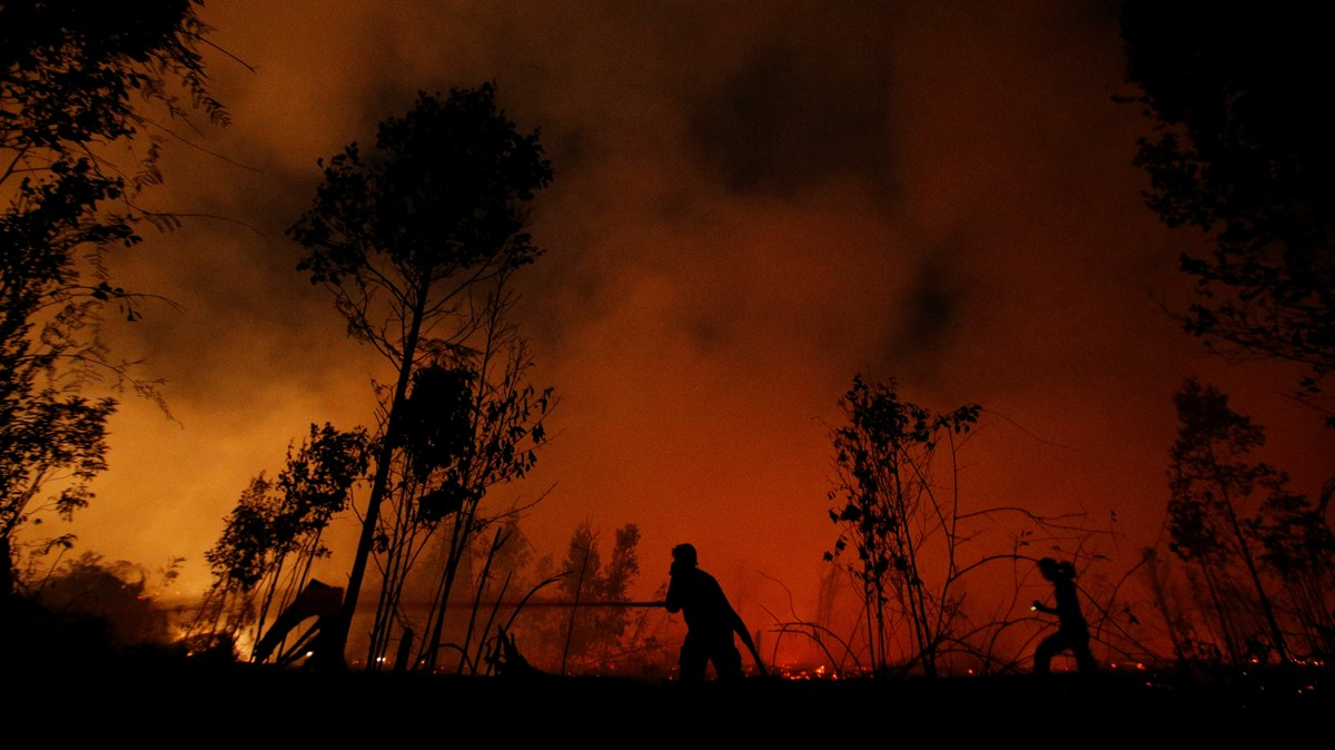 Indonesia's Rainforests Are Burning and They Matter Just as Much as the Amazon