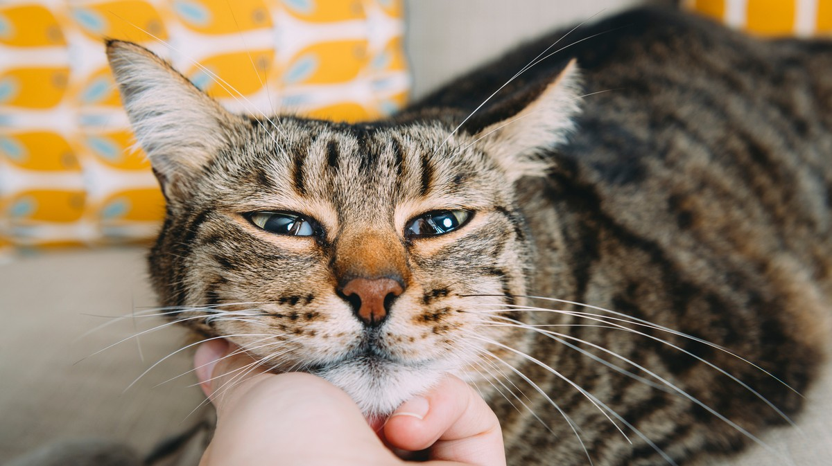 Your Cat Thinks of You Like a Parent, Study Suggests