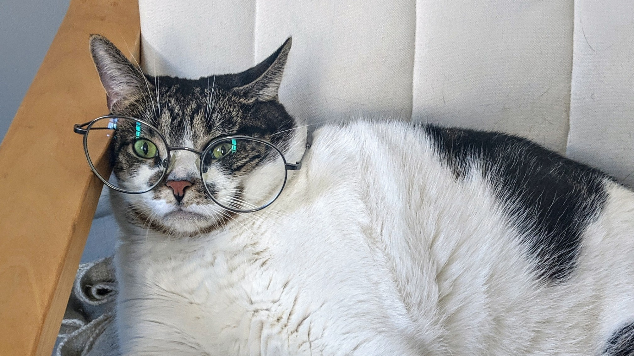 Alasan Psikologis Orang Suka Berbagi Foto Kucing Dan Anjing Imut Di Medsos