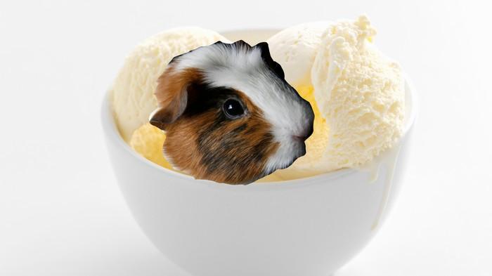 Ecuadorean Ice Cream Vendor's New Best-Seller Is Made from Guinea Pigs