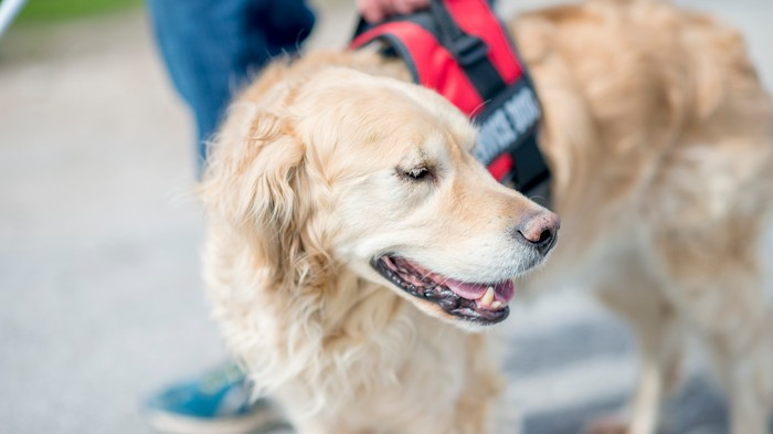 NYC Restaurant Owner Ordered to Pay $64,000 for Repeatedly Discriminating Against Service Dogs