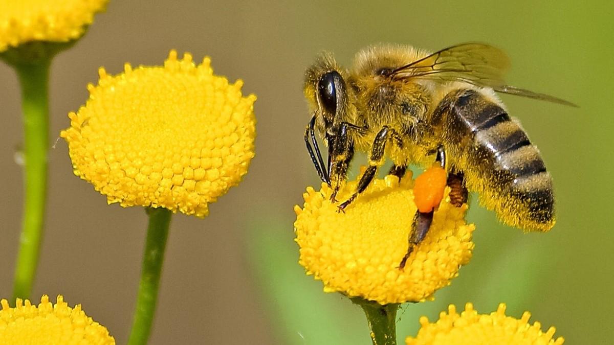 заселении интересные картинки про пчел может быть