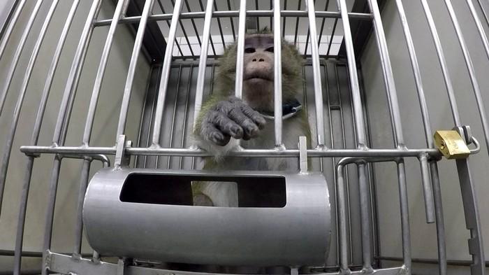 Tierversuche bei Hamburg: Wir haben mit dem Undercover-Aktivisten gesprochen