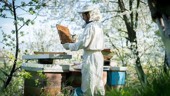 Dad Blames 'Hipster' Honeybee Keepers for Kid Getting Stung by Wasps in Park