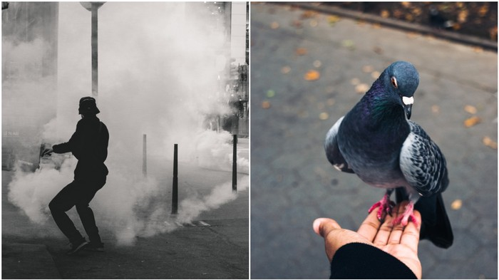 A Pigeon Was Tear-Gassed in the Protests. Hong Kongers Stopped to Help.
