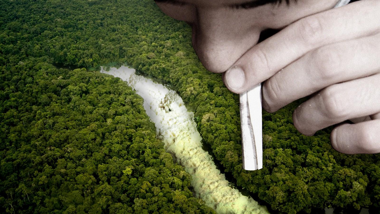 Warum Menschen Drogen nehmen, obwohl sie wissen, dass es Mensch und Natur killt