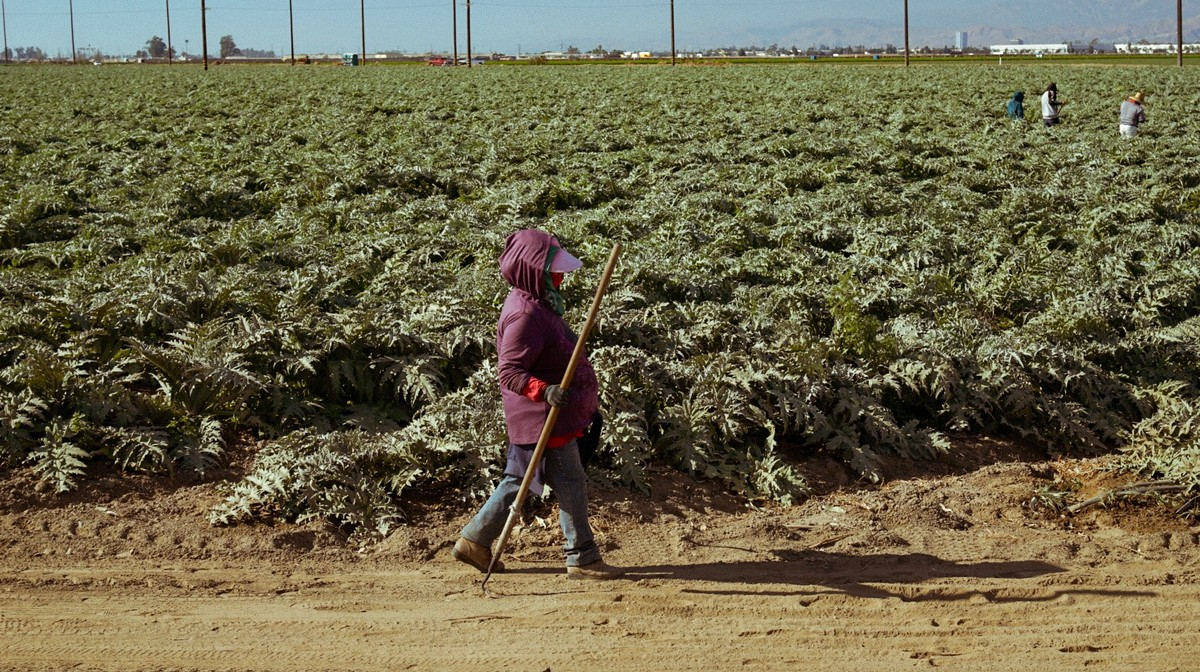 California's Burning, and Farmworkers Are Still in the Fields
