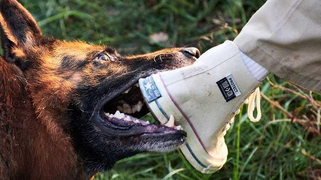 converse per cani