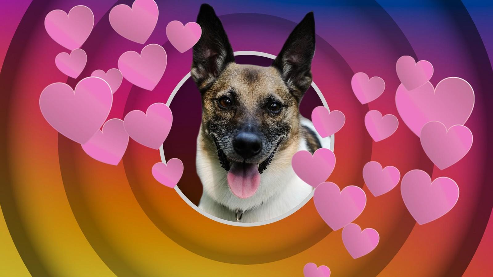 Follower kaufen: Wir haben unseren Bürohund zum Influencer gemacht