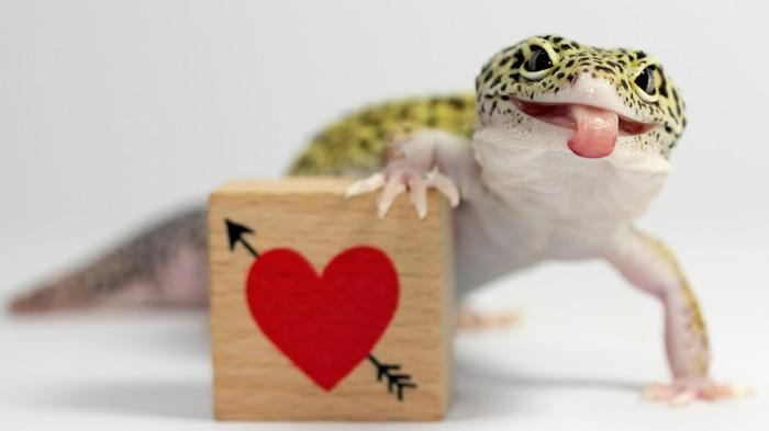 Instagram Geckos Deserve Your Love