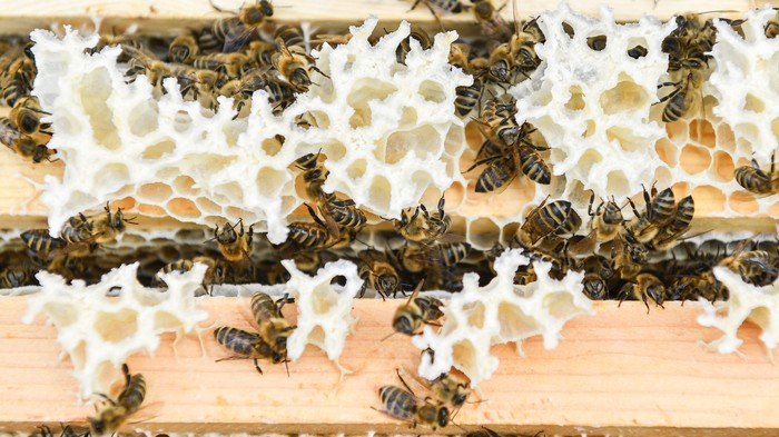 An Arizona Man Registered an Actual Beehive as a Service Animal