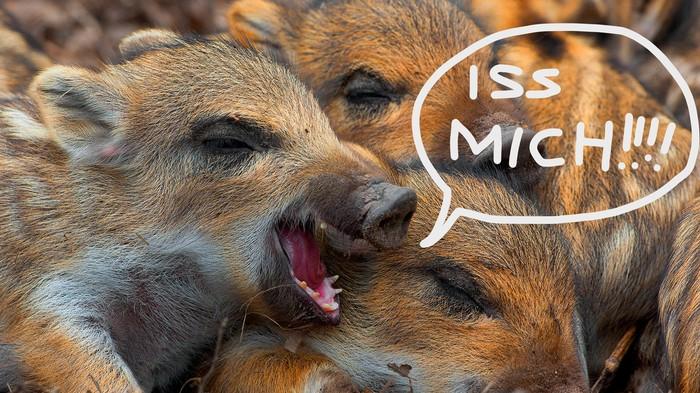 Iss mehr Wildschwein, wenn du das Klima retten willst
