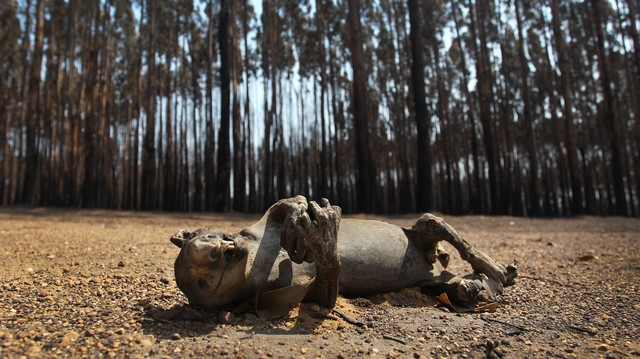 'Incomprehensible': Our Bushfires Are an Ecological Catastrophe