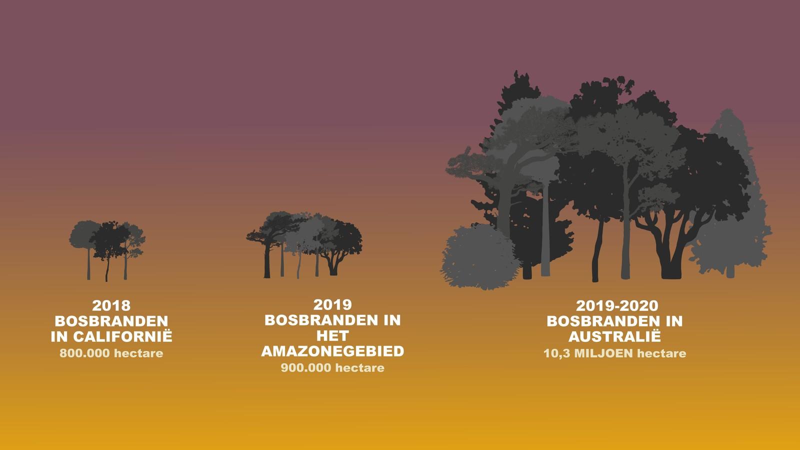 Hoe erg de bosbranden in Australië zijn, uitgelegd in beelden