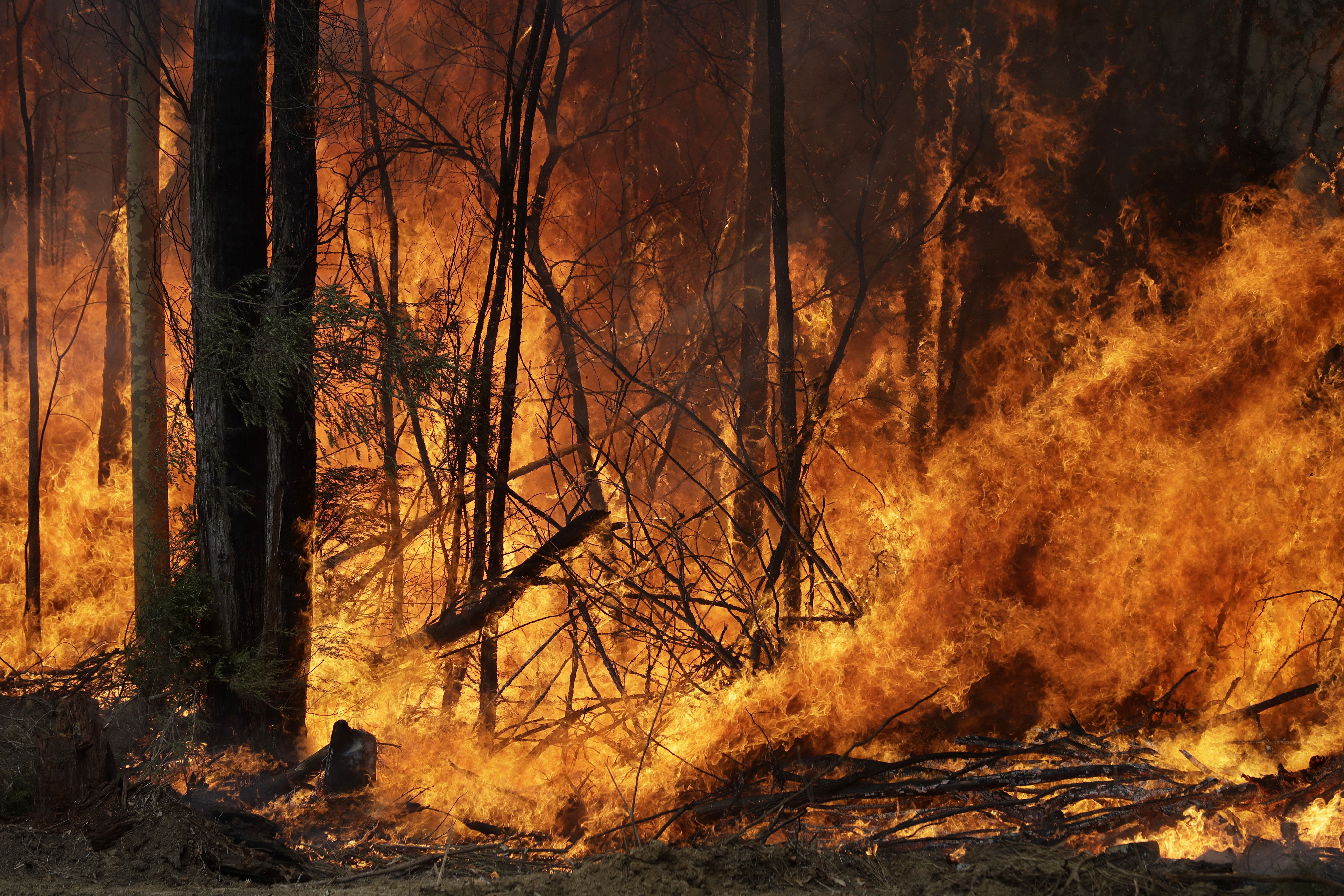 , 3 Australia Wildfires Officially Just Merged into a 'Mega-Blaze', Saubio Making Wealth