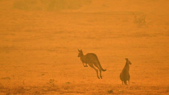 Utah Restaurant Decides This Is a Great Time to Start Serving Kangaroo Burgers