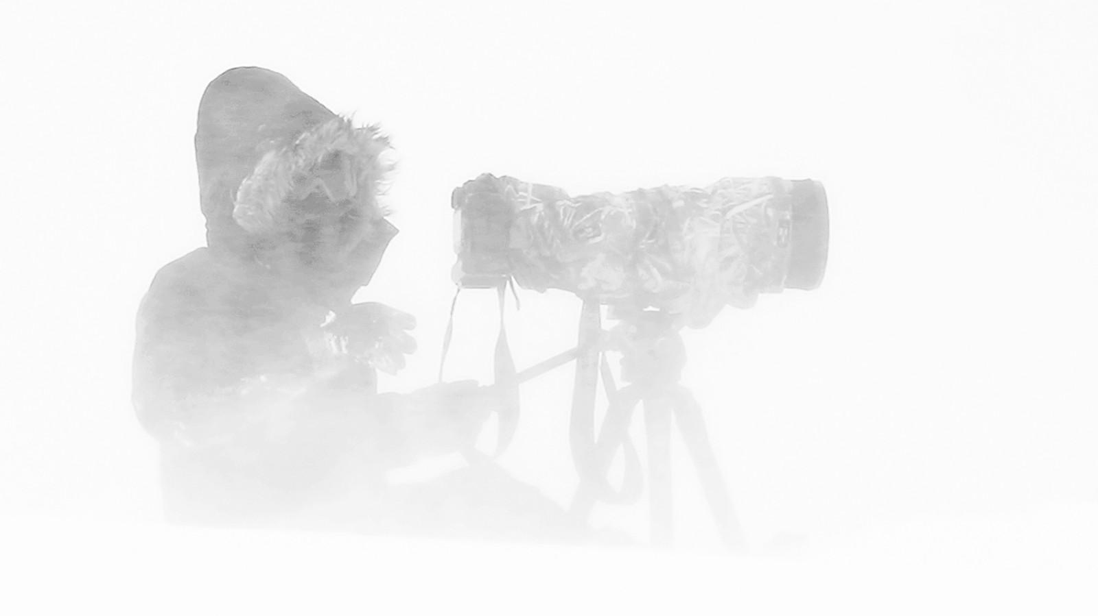 L'attente et la solitude du photographe animalier belge Michel d'Oultremont