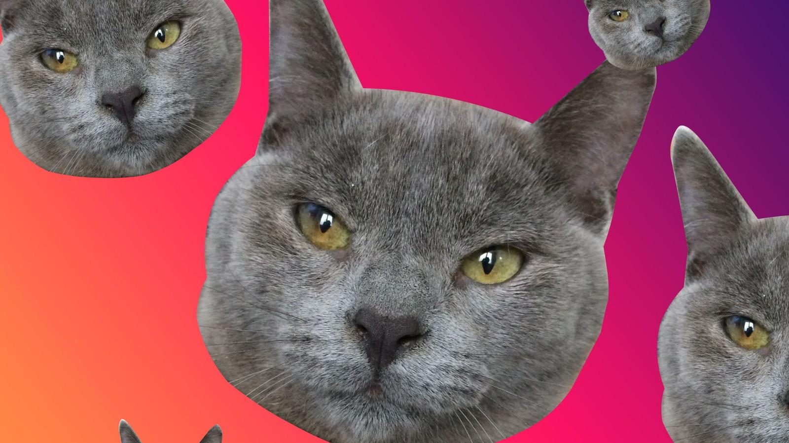 Dois-je créer un compte Instagram à mon chat pour réussir ma vie ?